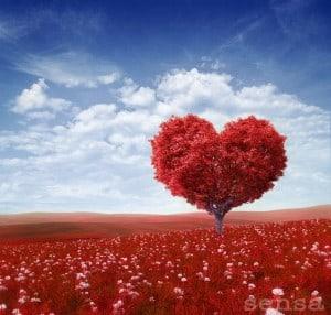 ljubezen-je-tukaj-in-zdaj